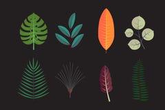 L'albero forestale lascia la raccolta Icone di vettore Foglia decorativa di autunno della flora royalty illustrazione gratis