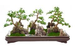 L'albero giapponese dei bonsai su fondo bianco isolato Fotografia Stock