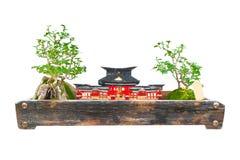 L'albero giapponese dei bonsai su fondo bianco isolato Immagine Stock Libera da Diritti