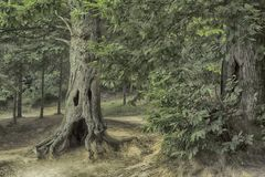 l'albero gradisce un gost1 Fotografia Stock Libera da Diritti