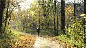 L'albero grazioso della strada del parco di autunno della collina della donna giù lascia la luce solare stock footage