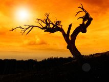 L'albero guasto Fotografia Stock