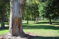 L'albero ha allineato il passaggio pedonale in legno di Laguna, Caliornia fotografia stock