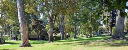 L'albero ha allineato il passaggio pedonale in legno di Laguna, Caliornia fotografie stock
