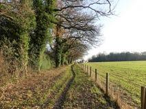 L'albero ha allineato il percorso accanto a terreno coltivabile nell'inverno, Chorleywood immagini stock