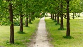 L'albero ha allineato il percorso nella distanza Immagine Stock