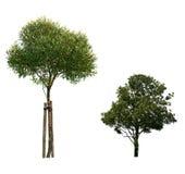 L'albero ha isolato Fotografia Stock Libera da Diritti