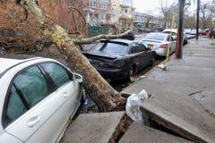 L'albero ha ritenuto giù all'automobile Fotografia Stock Libera da Diritti