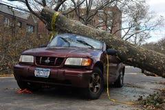 L'albero ha ritenuto giù all'automobile Fotografia Stock