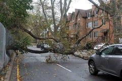 L'albero ha ritenuto giù alla terra Immagini Stock Libere da Diritti