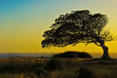 L'albero incavato immagine stock libera da diritti