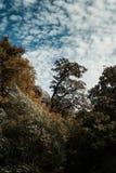 L'albero incontra il cielo fotografia stock libera da diritti
