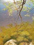 L'albero incontra l'acqua Fotografia Stock Libera da Diritti