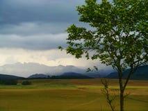 L'albero incornicia il paesaggio sudafricano drammatico Fotografie Stock