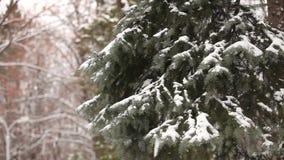 L'albero innevato, neve si trova sui rami di un albero, alberi di Natale nella neve stock footage
