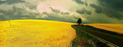 L'albero isolato dietro la strada asfaltata e l'agricoltura sistemano con il cielo nuvoloso drammatico fotografie stock libere da diritti