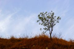 L'albero isolato ed asciuga l'erba ed il cielo blu marroni fotografia stock