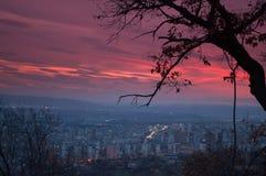 L'albero isolato sulla collina e sulla città di notte si accende Fotografia Stock