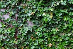 L'albero lascia la foglia verde Fotografia Stock