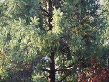 L'albero lascia la priorità bassa immagine stock libera da diritti