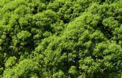 L'albero lascia la priorità bassa Fotografia Stock
