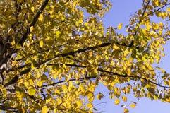 L'albero lascia un autunno sui precedenti del cielo natura, stagionale immagine stock