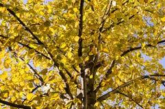 L'albero lascia un autunno sui precedenti del cielo natura, stagionale fotografia stock