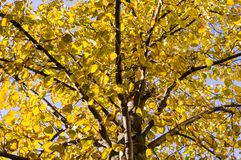 L'albero lascia un autunno sui precedenti del cielo natura, stagionale fotografie stock