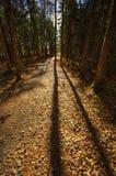 L'albero lungo della traccia di HDR Sussex ombreggia le foglie Fotografie Stock Libere da Diritti