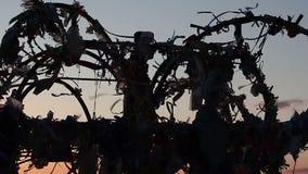 L'albero magico di desiderio etichetta l'ondeggiamento in vento, il cielo di crepuscolo, il tramonto, l'alba su fondo archivi video