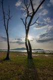 L'albero morto Fotografia Stock