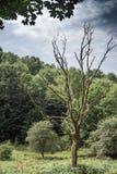 L'albero morto fotografie stock