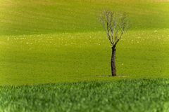 L'albero morto solo nel verde fotografia stock