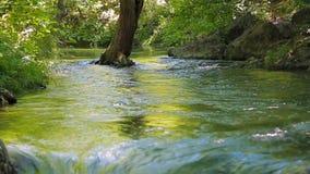 L'albero nel fiume è lavato con acqua video d archivio