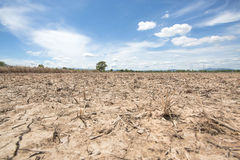 L'albero nel giacimento asciutto del riso dopo il raccolto con il fondo del cielo blu al lampoon Tailandia alla luce del sole di  Fotografia Stock Libera da Diritti