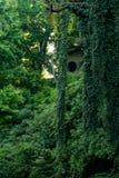 L'albero nella foresta Fotografia Stock Libera da Diritti