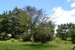 L'albero nello Zimbabwe Fotografia Stock