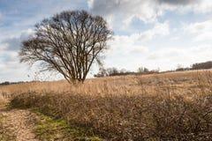 L'albero nudo con molti rami contrappone contro il cielo nuvoloso Immagini Stock Libere da Diritti