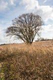 L'albero nudo con molti rami contrappone contro il cielo nuvoloso Immagine Stock Libera da Diritti