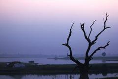 L'albero perenne muore nel lago immagine stock libera da diritti