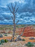 L'albero perso e solo Fotografie Stock Libere da Diritti