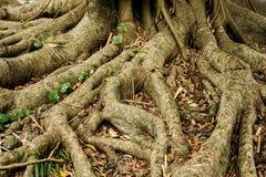 L'albero pianta il primo piano fotografia stock