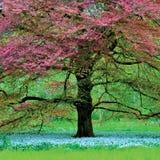 L'albero rosso Fotografia Stock