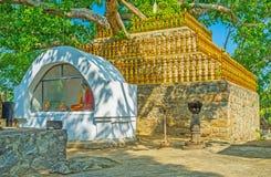 L'albero sacro in tempio di Padeniya Immagini Stock