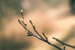 l'albero sboccia ed il primo lascia - lo sguardo verde d'annata Fotografia Stock