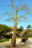 L'albero senza foglie dal parco fotografie stock libere da diritti