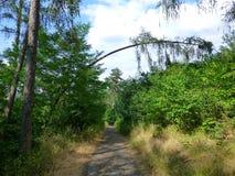 L'albero si è chinato un sentiero nel bosco Fotografia Stock Libera da Diritti