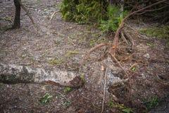 L'albero si è distrutto dall'intensità del ` s della tempesta fotografie stock libere da diritti