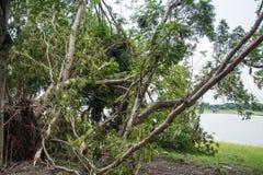 L'albero si è distrutto dall'intensità del ` s della tempesta fotografia stock