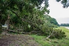 L'albero si è distrutto dall'intensità del ` s della tempesta immagini stock libere da diritti